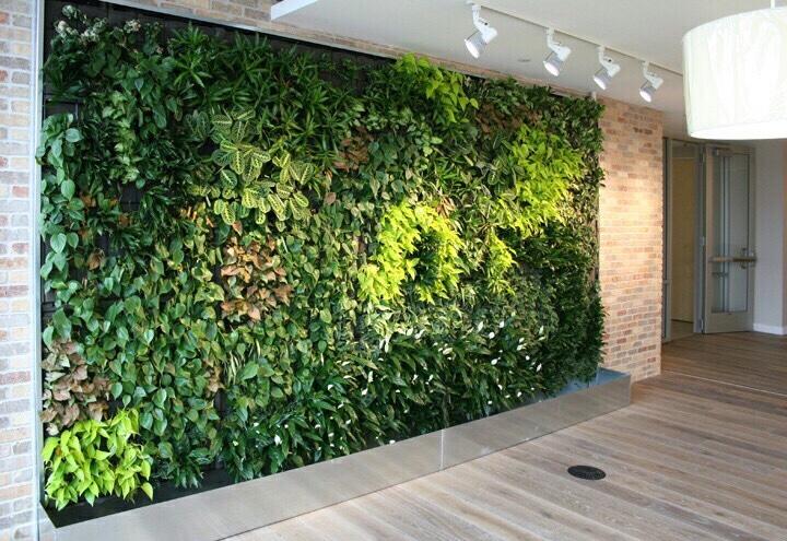 Vườn tường xanh mang đến không gian xanh cho ngôi nhà bạn