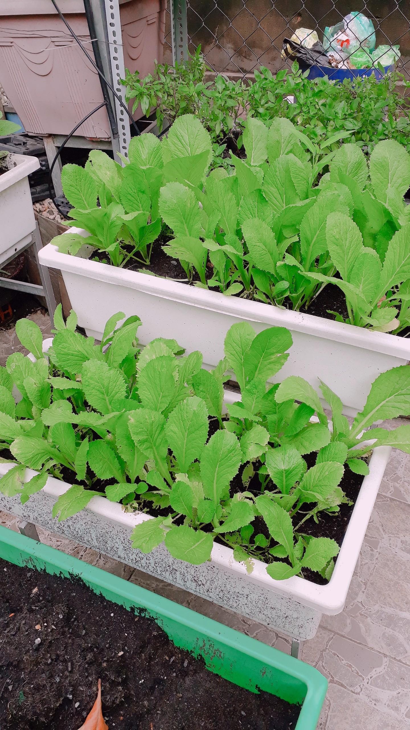 Những mô hình vườn rau sạch trong nhà đẹp và hiệu quả nhất hiện nay