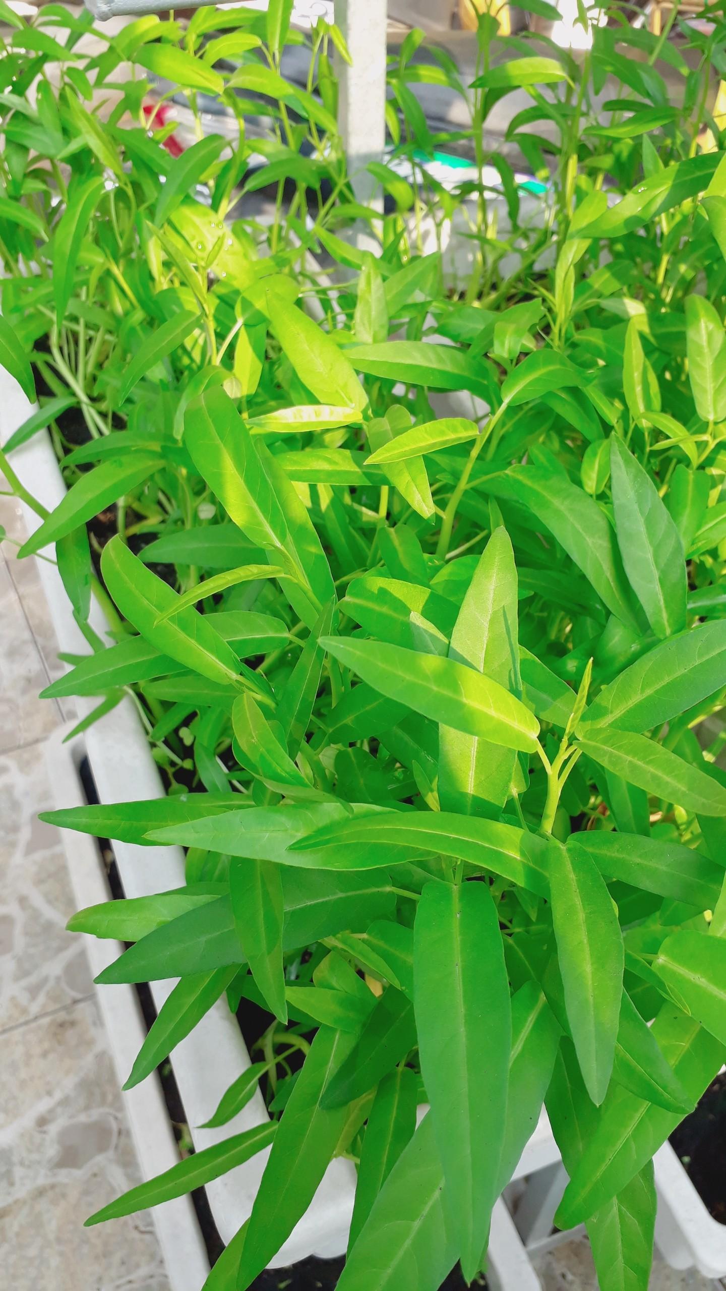 Mô hình vườn rau sạch tại nhà thông minh và hiệu quả nhất hiện nay-Công ty thiết kế Quang Anh