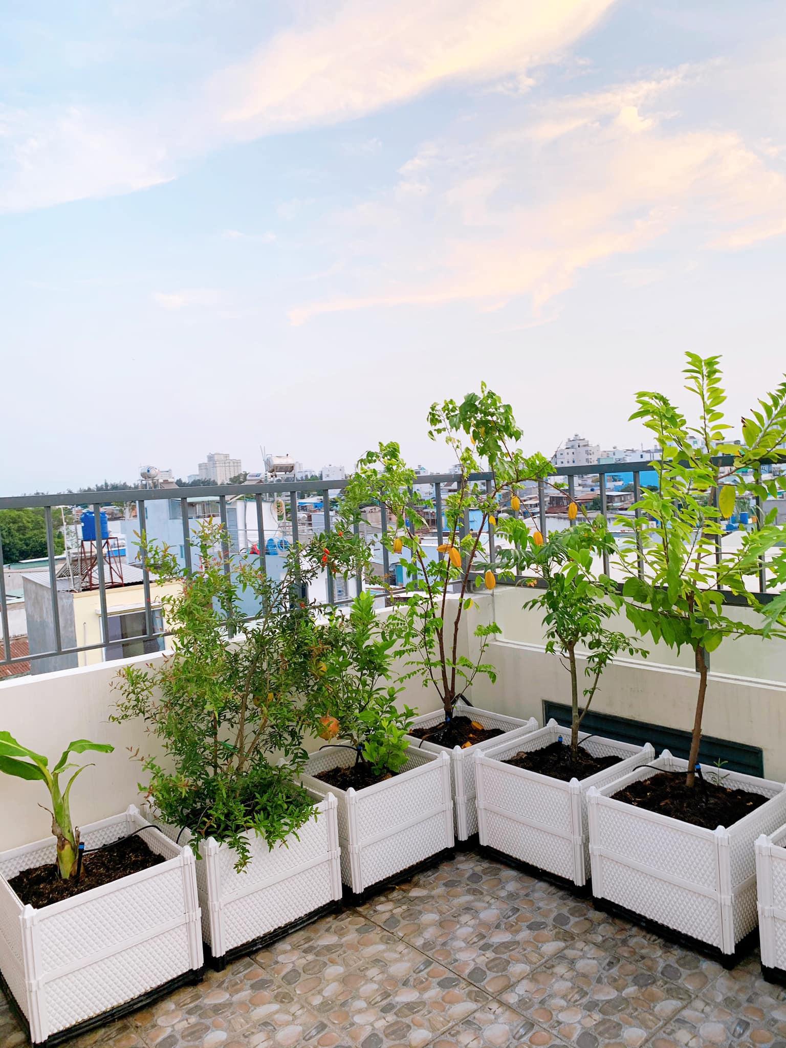 Làm vườn đẹp đón tết với chậu ghép thông minh Quang Anh HCM
