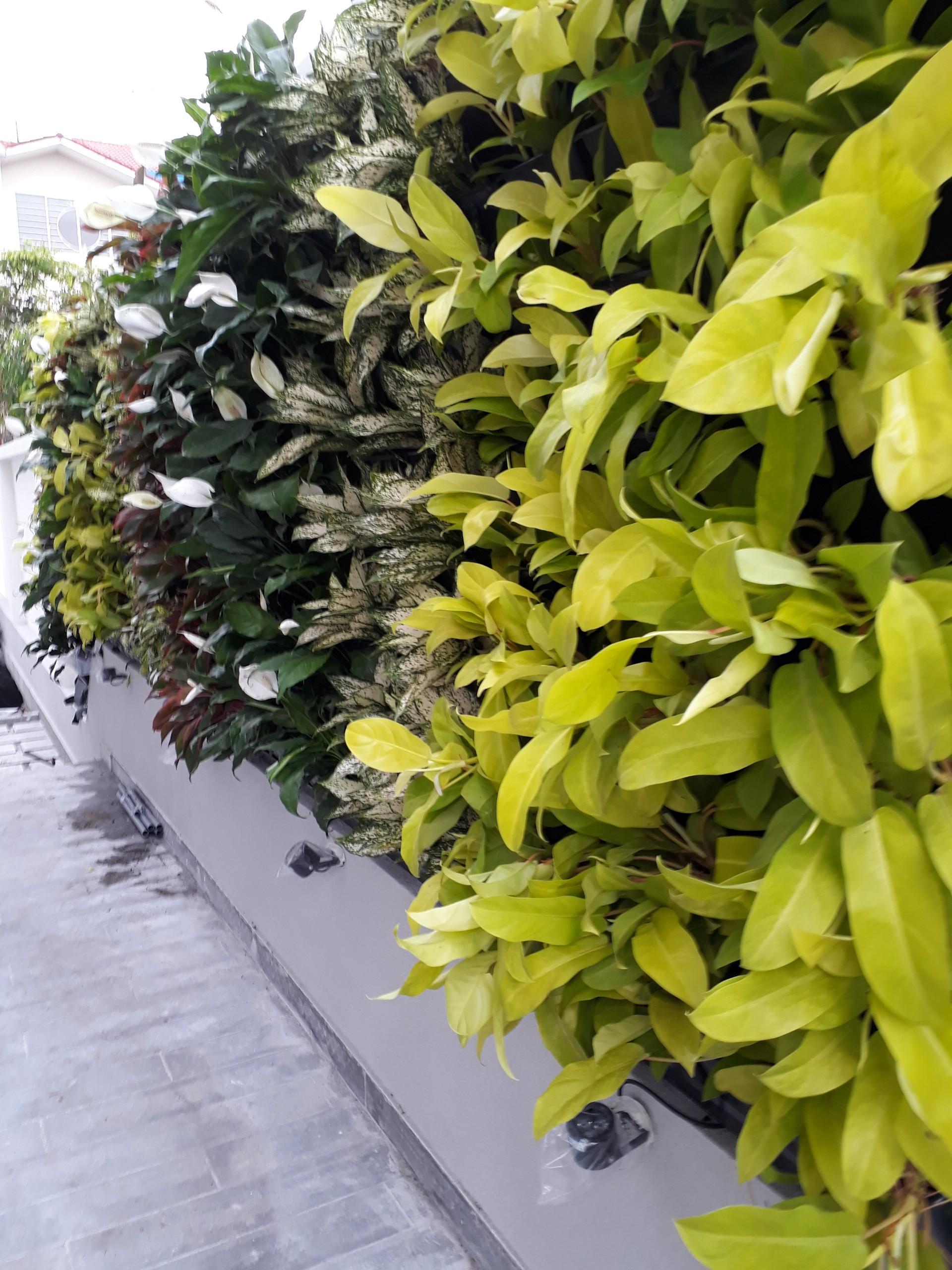 Hệ thống tưới cho modul vườn tường đứng - Quang Anh