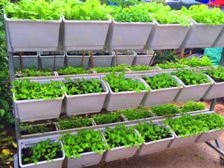 Bán đất trồng rau sạch chuyên dùng cho việc trồng rau tại nhà
