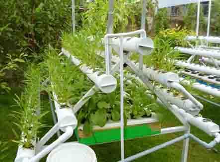 Thông tin giá giàn trồng rau thủy canh giá rẻ tại công ty Quang Anh