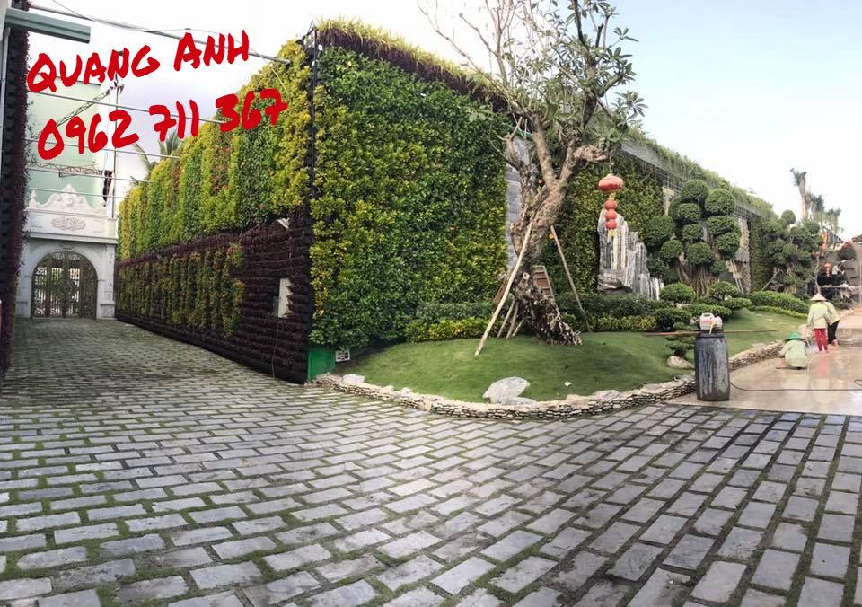 Thăm lại công trình vườn tường đứng tại Bình Chánh