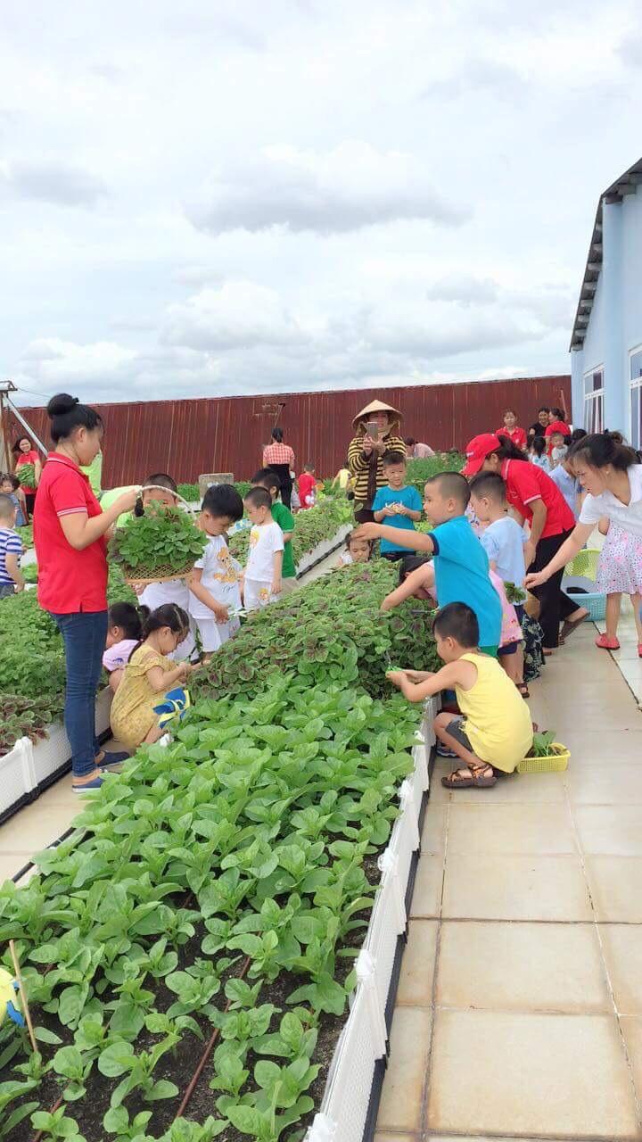 Quang Anh HCM - chuyên thi công mô hình vườn rau của bé tại các trường mầm non!