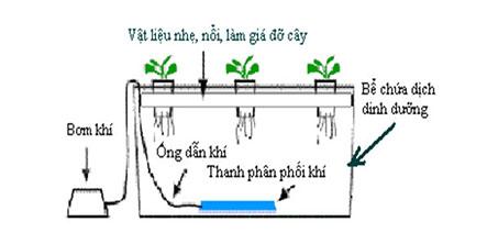 Cách làm giàn trồng rau thủy canh hiệu quả nhất tại nhà-Tư vấn cùng chuyên gia