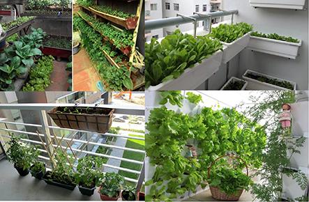 Hướng dẫn cách trồng rau sạch cùng chuyên gia tại công ty Quang Anh
