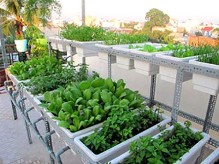 Mô hình trồng rau sạch tại nhà-Hướng dẫn để bạn đạt hiệu quả trong việc trồng rau sạch