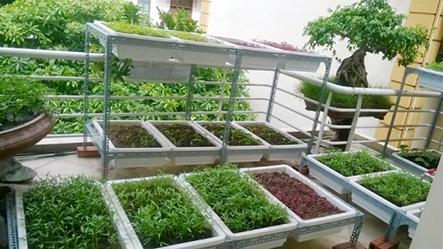 Cách trồng rau sạch trong thùng xốp cùng các chuyên gia Quang Anh