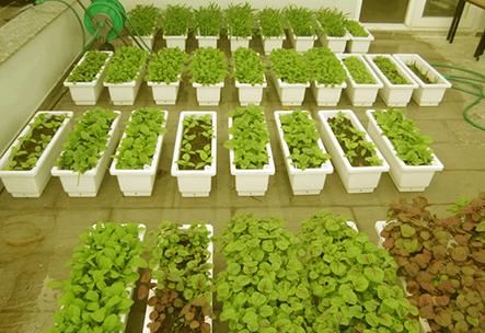 Chậu trồng rau thông minh Quang Anh-dụng cụ trồng rau tại nhà tốt nhất