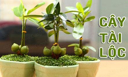 Các loại cây trồng trong nhà theo phong thủy giúp sự nghiệp của bạn thuận lợi hơn.