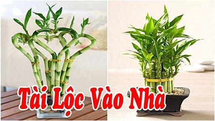 Những cây phong thủy giúp gia chủ hút tài lộc tốt nhất khi trồng