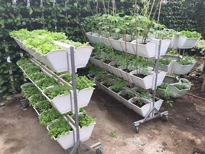 Thiết kế vườn rau sạch ở ban công chung cư