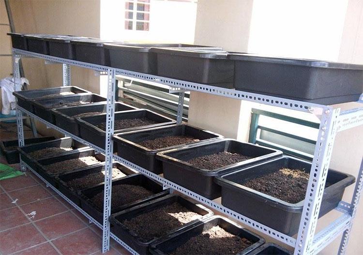 Hệ thống tưới cho giàn kệ trồng rau Cty Quang Anh