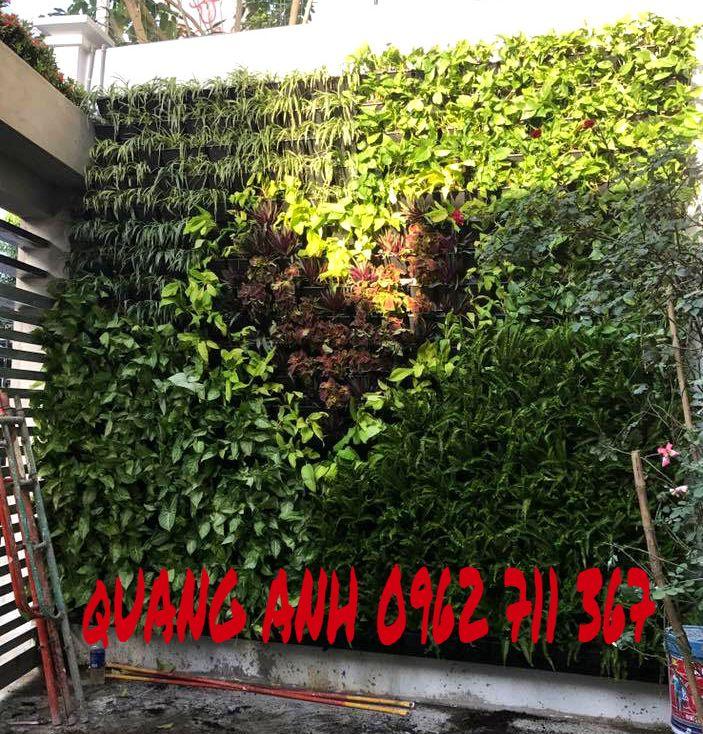 Vườn tường đứng và vườn rau sạch tại Cần Thơ
