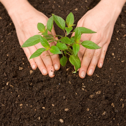 Mua đất trồng cây ở tphcm tốt nhất-Công ty Quang Anh