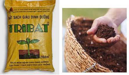 Quang Anh địa chỉ bán đất giá thể trồng cây hcm giá rẻ