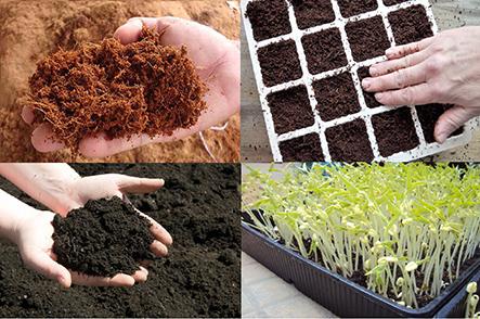 Quang Anh điểm lựa chọn tốt nhất để giúp bạn mua đất trồng rau sạch
