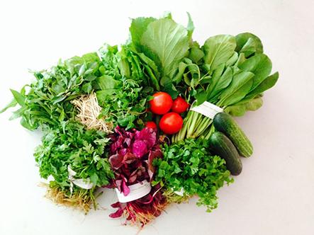 Dịch vụ trồng rau sạch tại nhà chất lượng và giá rẻ nhất tại tphcm