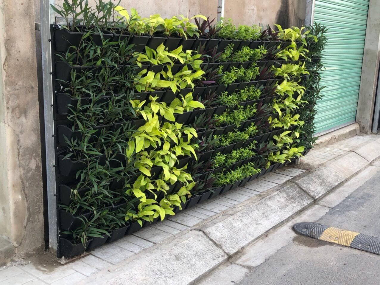 Quang Anh HCM thi công vườn tường đứng hành lang cho khách hàng ở quận Thủ Đức!