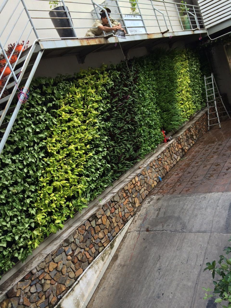 Địa chỉ thiết kế tường cây xanh đẹp và uy tín nhất tại tphcm-Quang Anh