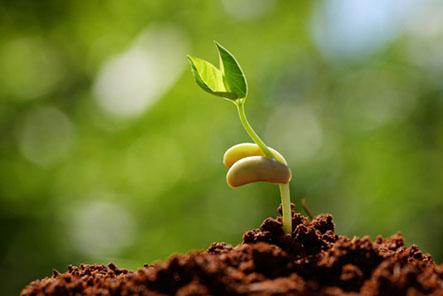 Mua hạt giống rau tốt nhất hiện nay thì đến đia chỉ nào mụa thì hiệu quả
