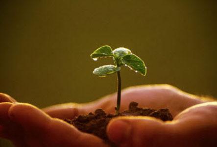Bán hạt giống rau hiệu quả trong việc trồng rau tại nhà