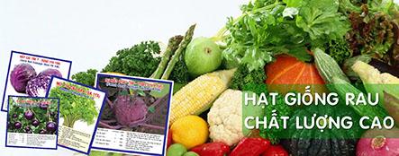 Địa chỉ giúp bạn mua hạt giống rau sạch giá rẻ tại tphcm