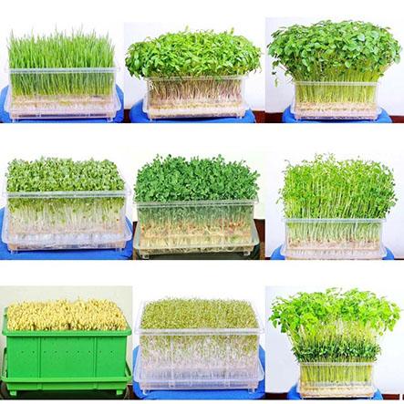 Địa chỉ mua hạt giống trồng rau mầm tphcm tốt nhất-Công ty Quang Anh
