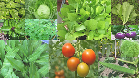 Bán hạt giống rau chất lượng với mô hình trồng rau tại nhà-Công ty Quang Anh