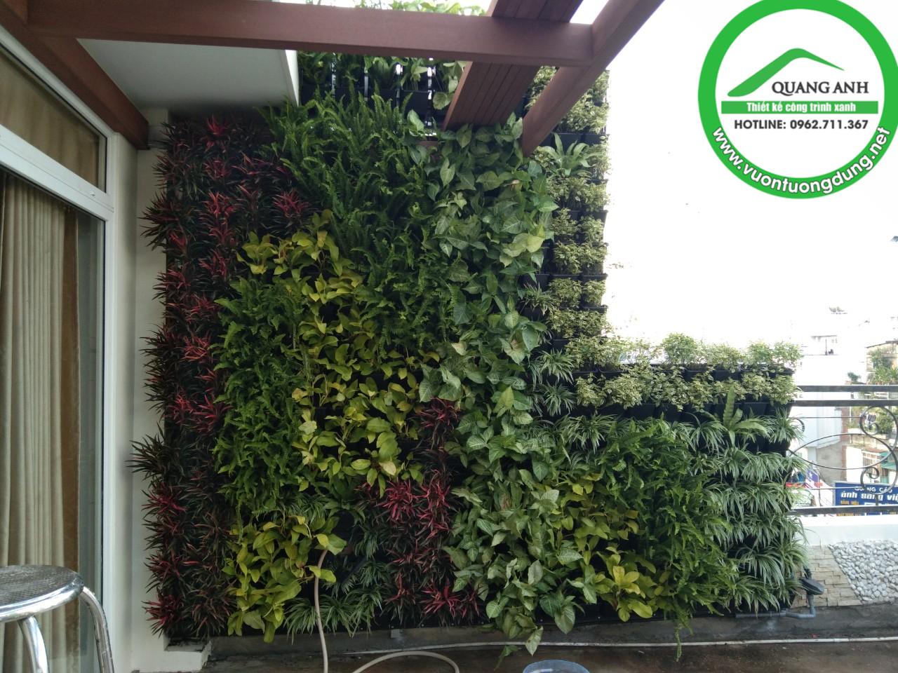 Quang Anh HCM - thi công vườn tường đứng đẹp cho chị khách hàng ở Hai Bà Trưng, Quận 3, TPHCM đón tết!
