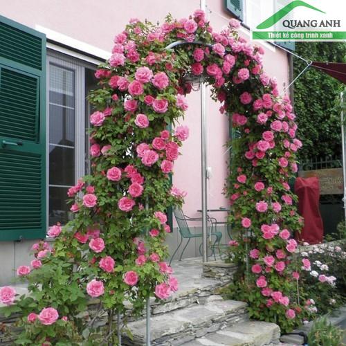 Quang Anh HCM - Phân phối giàn leo hoa hồng, bầu bí cực đẹp, giá cả phải chăng!