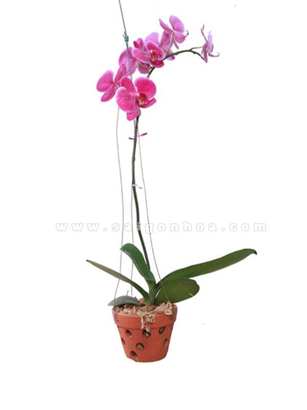 Chậu trồng lan giá rẻ tại Quang Anh HCM