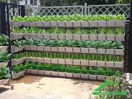 Những sản phẩm cần thiết cho việc trồng rau sạch đạt hiệu quả cao nhất