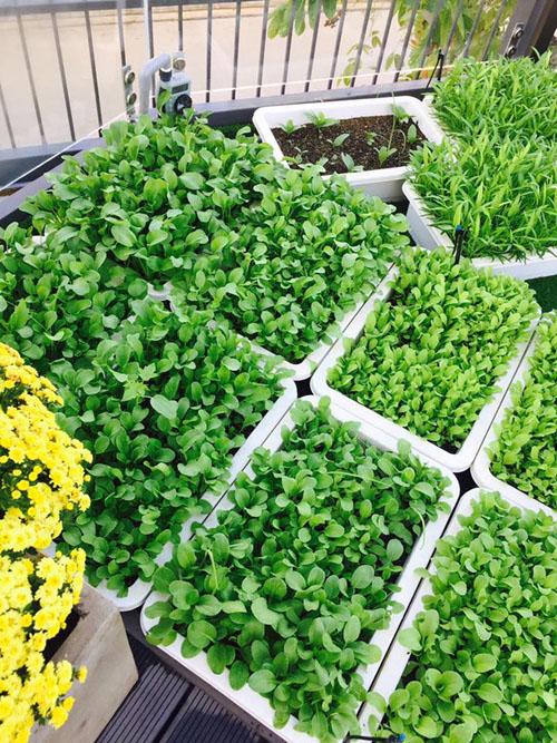 Địa chỉ bán chậu trồng rau giá rẻ tại tphcm-Công ty Quang Anh
