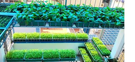 Kinh nghiệm trồng rau sạch tại nhà hiệu quả cùng chuyên gia Quang Anh