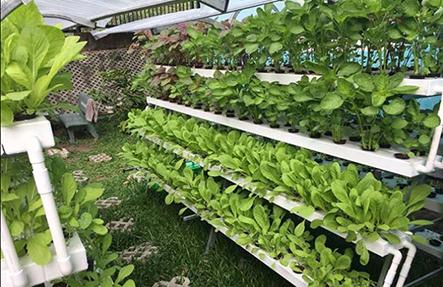 Địa chỉ lắp đặt hệ thống trồng rau thủy canh tại nhà giá rẻ tại tphcm