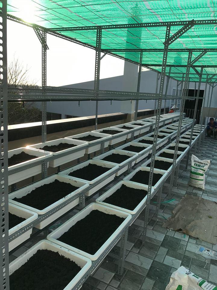 Thi công vườn rau sạch tại Long An - công ty Quang Anh