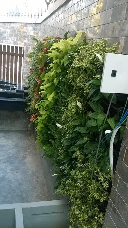 mảng tường xanh tại nhà hàng hoàng hải quận 4