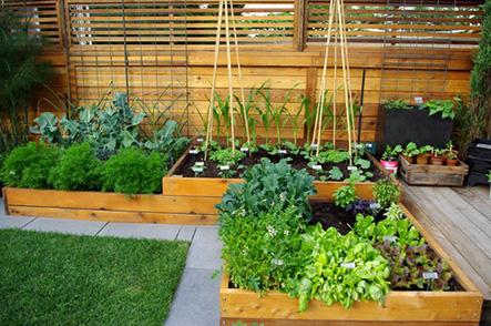Đến địa chỉ nào để thực hiện thiết kế mô hình vườn rau sạch tại nhà