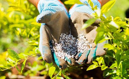 Bón phân gì cho rau sạch tại nhà để đạt kết quả cao nhất khi trồng ?