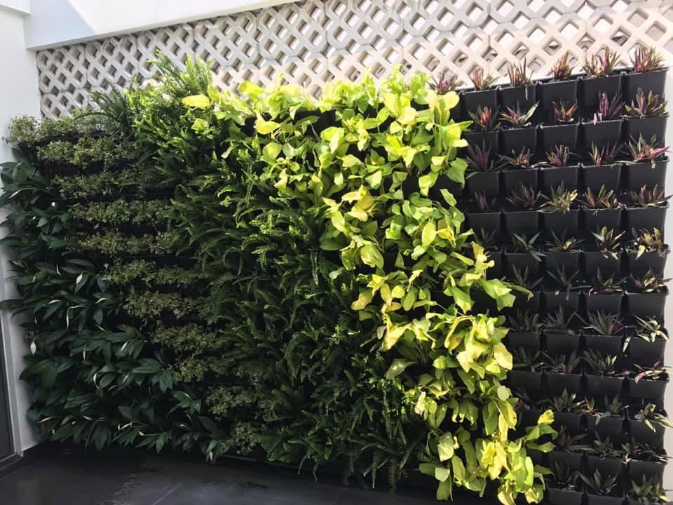 Trang trí vườn tường cây thật HCM