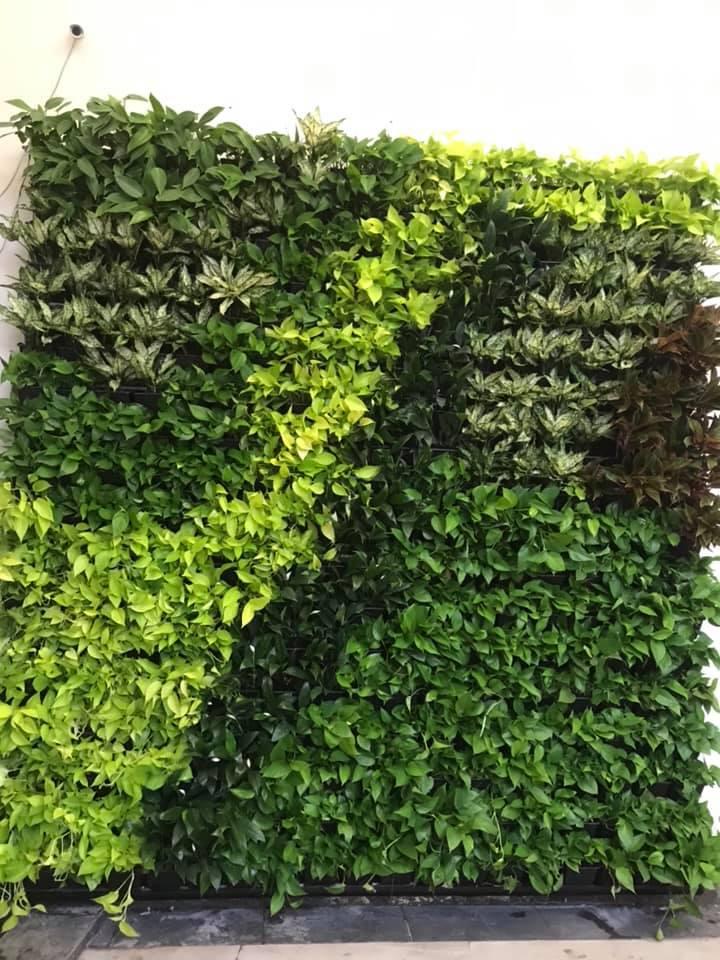 Quang Anh thi công vườn tường đứng chuyên nghiệp – Quận 3