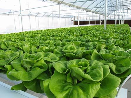Giới thiệu những mô hình trồng rau an toàn tại nhà hiệu quả nhất