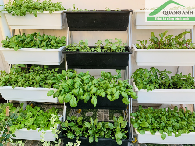 Cách trồng rau tại nhà hiệu quả không phải ai cũng biết!