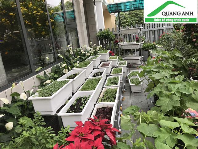 Mách bạn một số mẹo trồng rau mùa mưa nhà nhà áp dụng thành công!