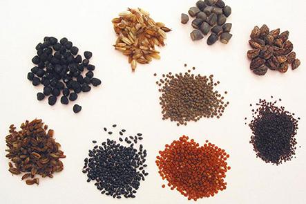 Giới thiệu shop hạt giống tphcm chất lượng nhất hiện nay