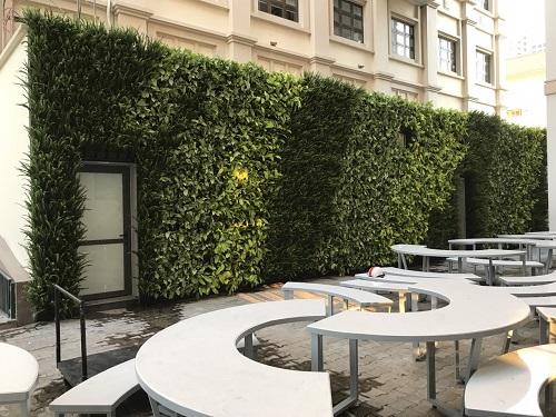 Thiết kế vườn trên tường dành cho ngôi nhà Việt
