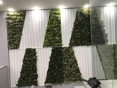 Thi công vườn tường đứng Hậu Giang – Tân Bình