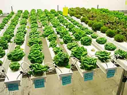 Thiết kế giàn trồng rau thủy canh đẹp và hiệu quả nhất-Công ty Quang Anh